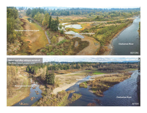 River Island - Goose Creek Before/After